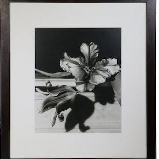 HORST P. HORST (NY/FRANCE/GERMANY, 1906-1999)