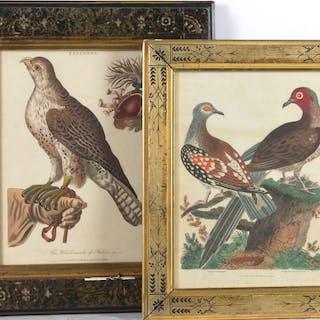 (2) Bird engravings, Richard Evans, J. Wilkes