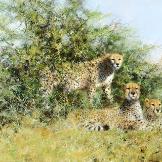 David Shepherd (1931–2017): Cheetahs in Thorn Bush