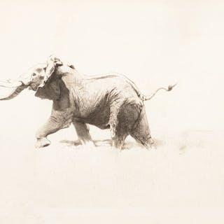 Wilhelm Kuhnert (1865–1926): Elephant