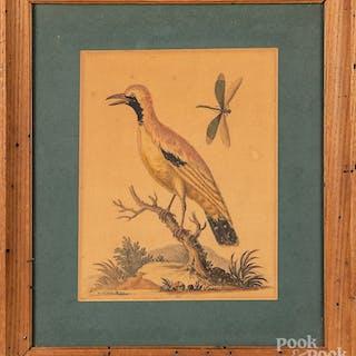 George Edwards bird engraving, etc.