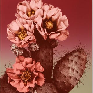 "Lee Trenton Signed ""Prickly Pear"" Limited Edition 19x24 Lithograph"