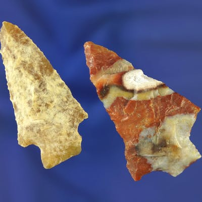 """2nicely colored Florida points, largest is 2 1/4"""". Pasco/Pinellas"""