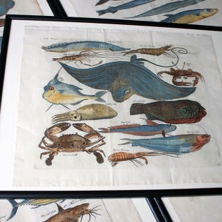 A Beautiful Group of Five Hand-Coloured Copper Plates of Fish From