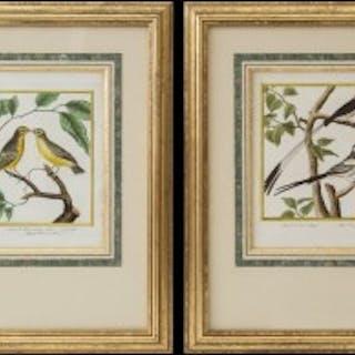 Pair of Engravings of Birds by François Nicolas Martinet