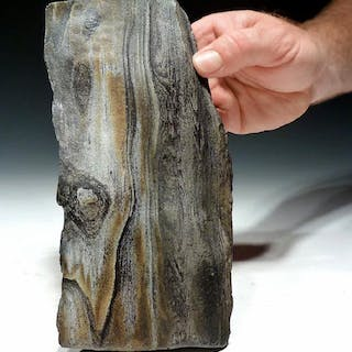 A colorful, naturally petrified wood log, Miocene