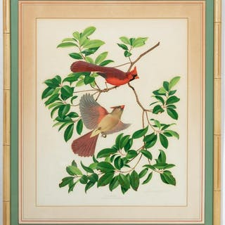 Menaboni Signed Gouache, Richmondena Cardinals