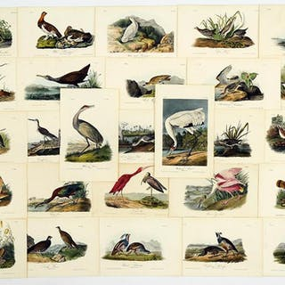 John James Audubon (American, 1785-1851) The Birds of