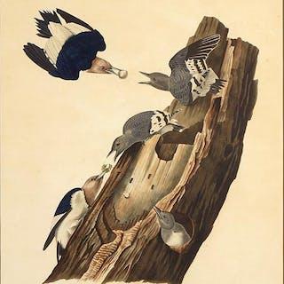 John James Audubon (American, 1785-1851) Red-Headed