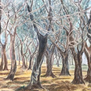 Signed Colored Drawing Depicting Forest
