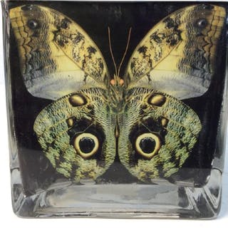 YBS IMPORTS Butterfly Square Glass Vase