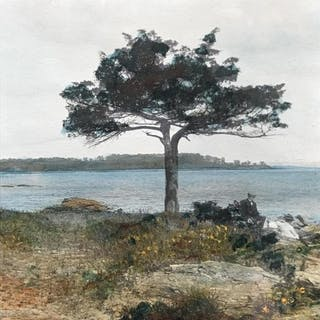 Signed Hand-Colored Photograph, The Lone Tree