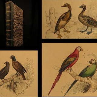 1800 Buffon Natural History Illustrated BIRDS Zoology