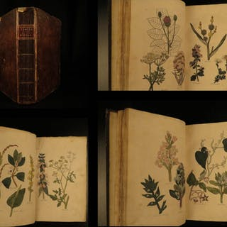 1812 1ed John Hill HERBAL Medicine Plants Flowers Color