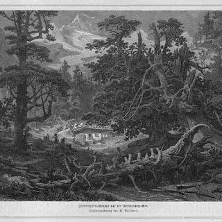 ÖSTERREICH: ZILLERTAL/ TIROL: Grawandter Alm und Zirbelkiefern -*- um 1875