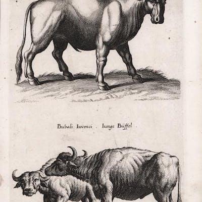 Cascata della Quaradella presso Cremia sul Lago di Como...