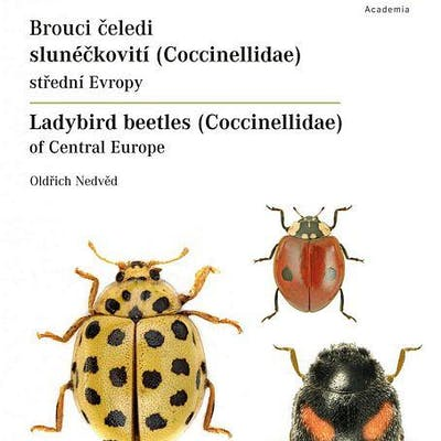 Ladybird Beetles (Coccinellidae) of Central Europe   Barnebys