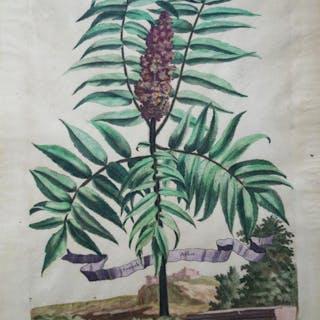 Sumach Arbor