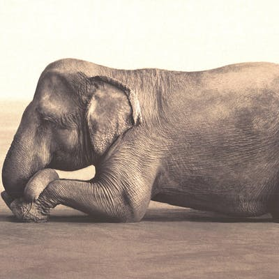 Gregory Colbert-Boy Reading to Elephant-2005 Offset Lithograph Colbert