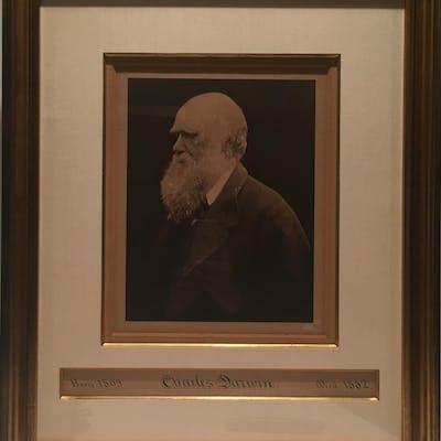 Charles Darwin (DARWIN, CHARLES.) Cameron, Julia Margaret.