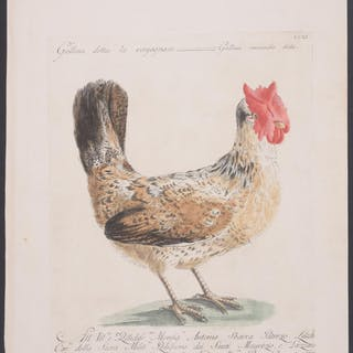 Rooster or Chicken Saverio Manetti