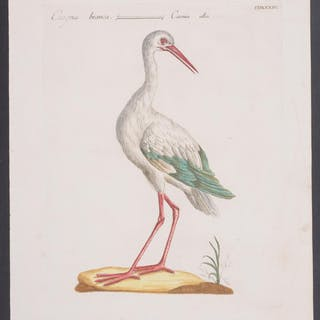 White Stork Saverio Manetti