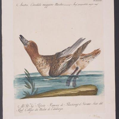 Duck Saverio Manetti