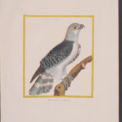 Bird of Prey Francois Nicolas Martinet & Georges Louis...