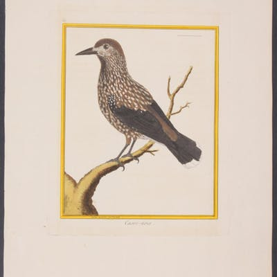 Spotted Nutcracker Francois Nicolas Martinet & Georges...