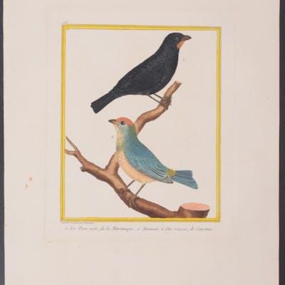 Sparrows Francois Nicolas Martinet & Georges Louis...