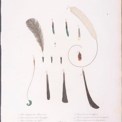 Bird of Paradise Francois Levaillant & Jacques Barraband...
