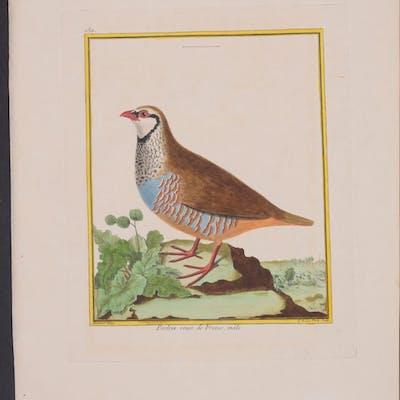 Red-legged Partridge Francois Nicolas Martinet & Georges...