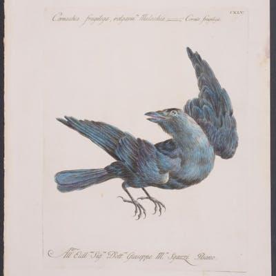 Crow Saverio Manetti