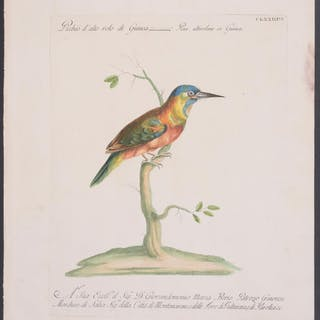 Woodpecker Saverio Manetti