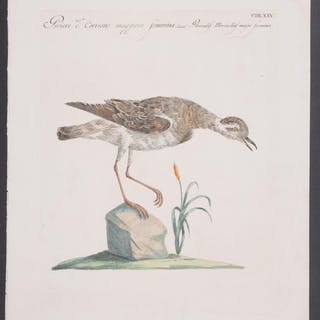 Waterbird Saverio Manetti