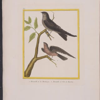 Swallows Francois Nicolas Martinet & Georges Louis...
