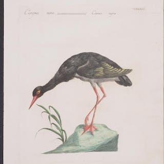 Black Stork Saverio Manetti