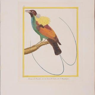Magnificent Bird-of-Paradise Francois Nicolas Martinet...