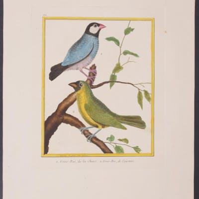 Yellow-Green Grosbeak & Grosbeak Francois Nicolas...