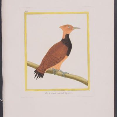 Woodpecker Francois Nicolas Martinet & Georges Louis...