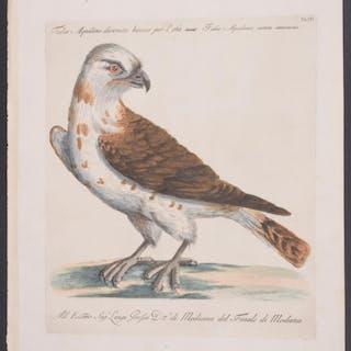Falcon Saverio Manetti