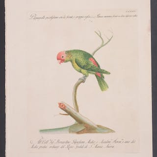 Parrot Saverio Manetti