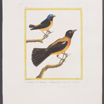 Tanagers Francois Nicolas Martinet & Georges Louis...