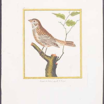 Corn Bunting Francois Nicolas Martinet & Georges Louis...