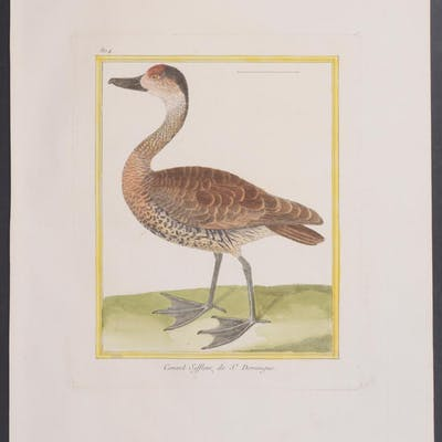 Wigeon (Duck) Francois Nicolas Martinet & Georges Louis...