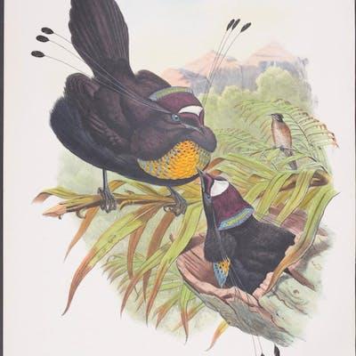 Six-plumed Bird of Paradise Richard Bowdler Sharpe & John Gould