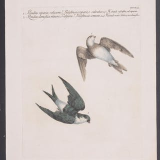 Swallow Saverio Manetti