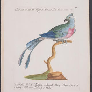 Cuckoo Saverio Manetti