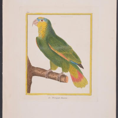 Parrot Francois Nicolas Martinet & Georges Louis Leclerc...