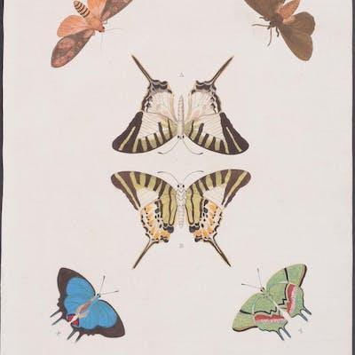 Butterfly & Moth Pieter Cramer Antique Print,Butterfly,Entomology